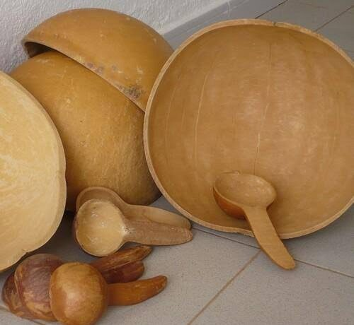 The African calabash