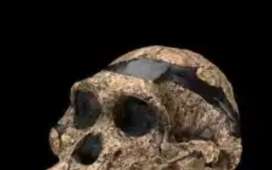 A Complete Skull of an Australopithecus Africanus of 2 million Years Old Discovered in South Africa